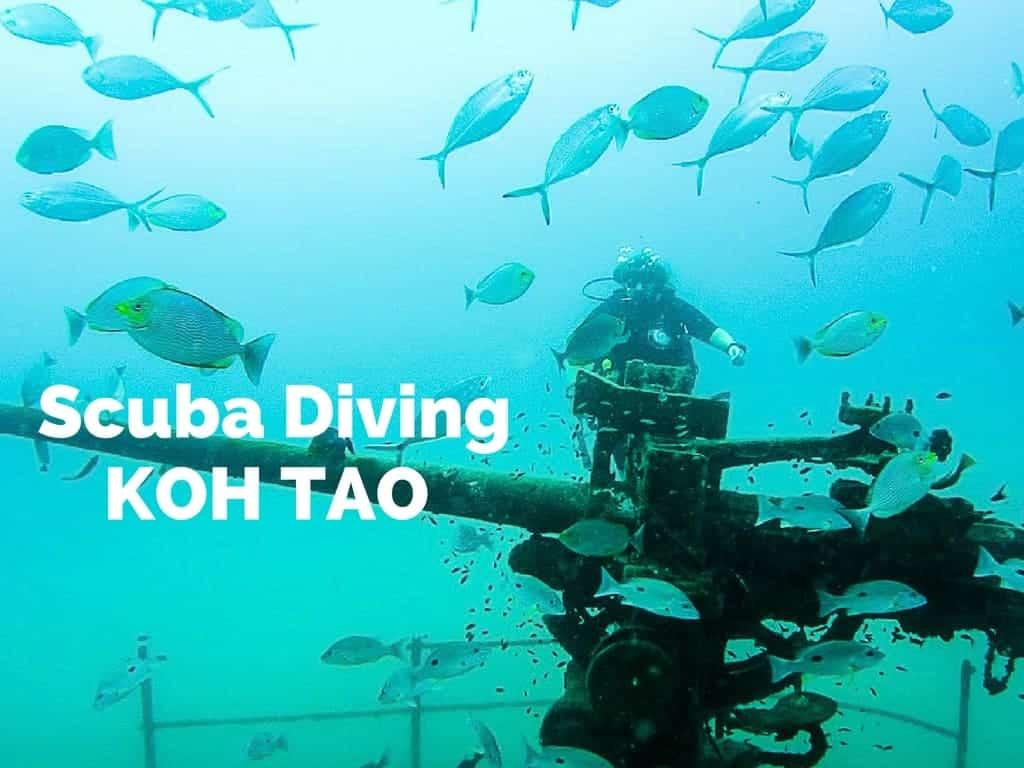 Scuba diving in koh tao eat sleep breathe travel - Dive in koh tao ...