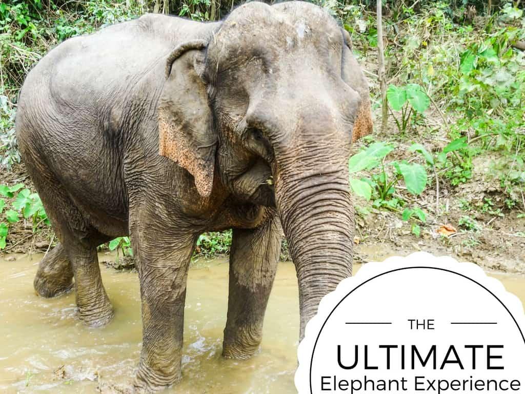 Mandalao tours responsible tourism with elephants in laos for Designhotel elephant prague 1 czech republic